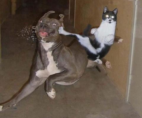 animaux_chien_chat_135.jpg